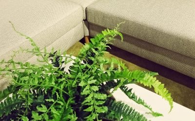 6 Types of Pet-Friendly Houseplants